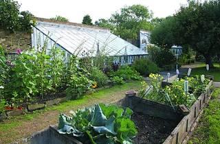 veg garden IMG_0997 LR.jpg
