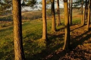Winnie-The-Pooh Walks in Ashdown Forest