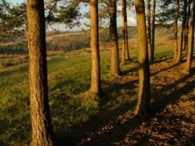 Winnie-The-Pooh Walks in Ashdown Forest