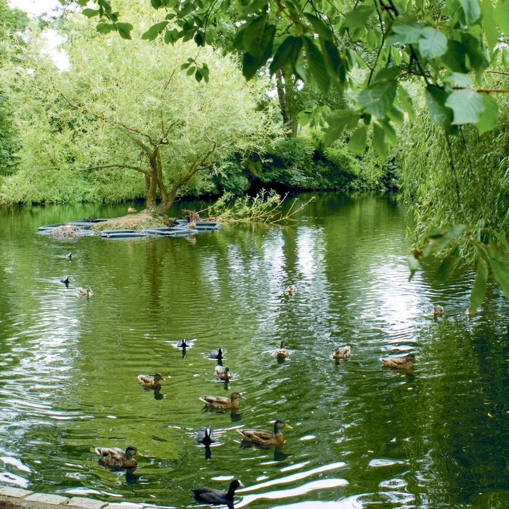 A hidden garden in Brockwell Park