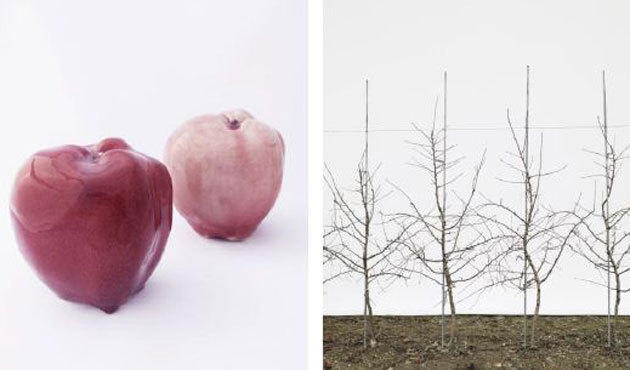 Jessica Rath: Take Me to the Apple Breeder