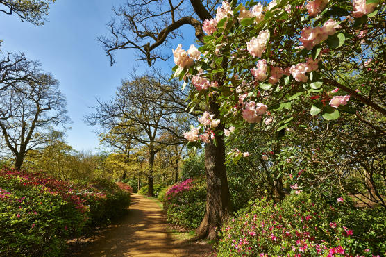 Secret Garden: Secret Parks And Gardens In London
